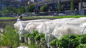 Solefood Urban Farm